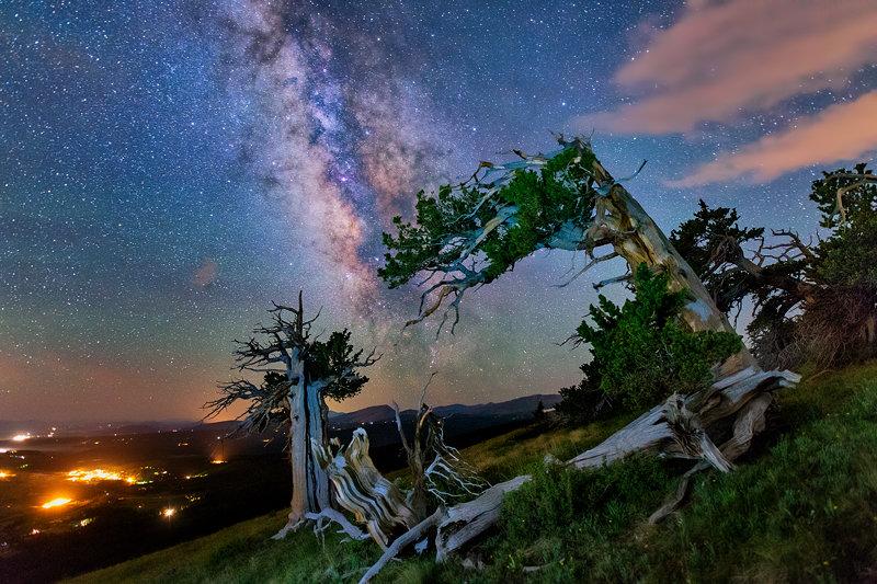 "12"" x 18"" METAL PRINT of Twisted Pine Milky Way, Colorado"