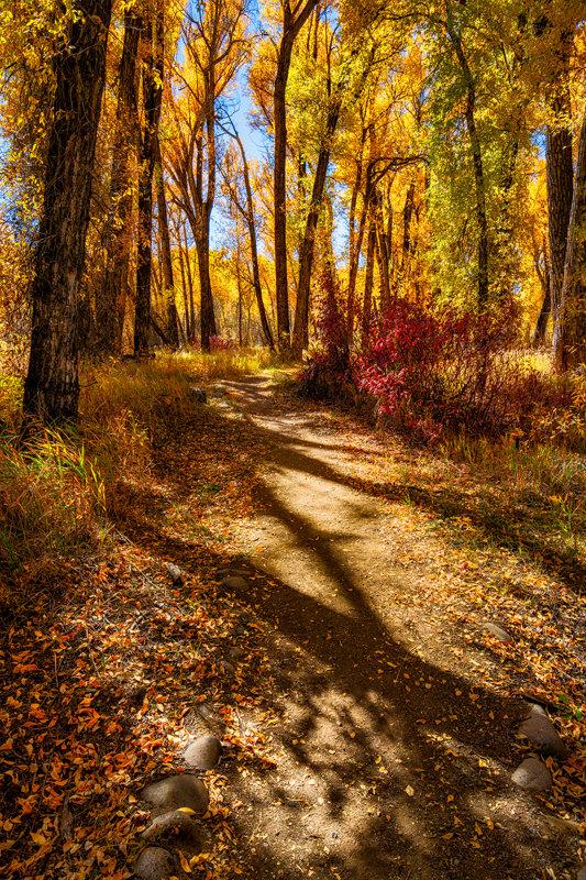 "24"" x 36"" Canvas Wrap of Gunnison Fall Foliage, Colorado"