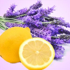 Lemon Lavender H1005