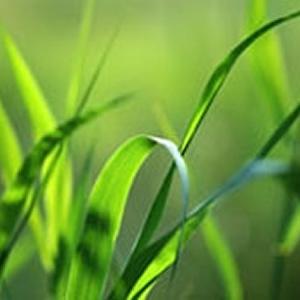 Fresh Cut Grass SS1001