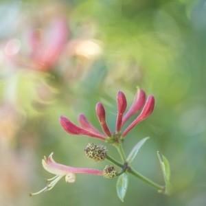 SmellieFleurs - Fleur