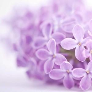 SmellieFleurs - Flowerblast