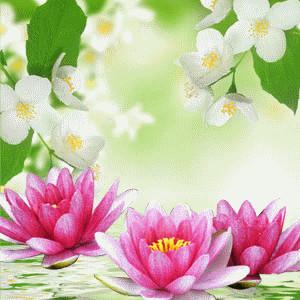 SmellieFleurs - Waterlily & Jasmine