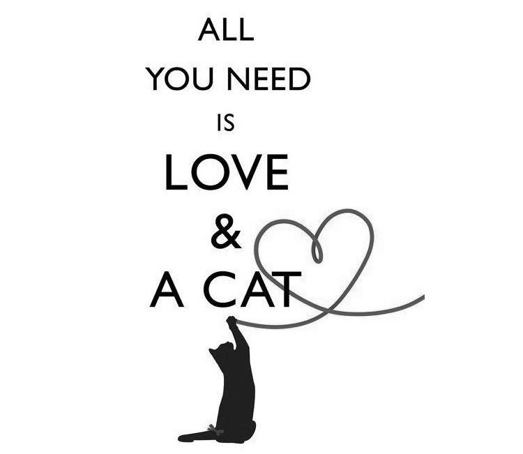SmellieFlowers - Cat Black & White - zwart/wit/grijs