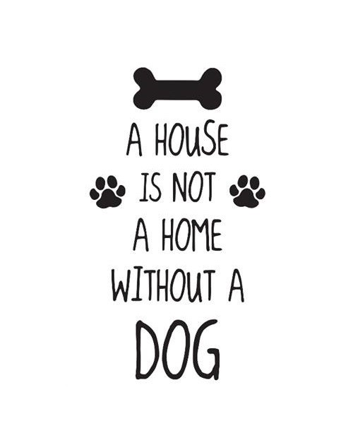 SmellieFlowers - Dogs Black & White - zwart/wit/grijs
