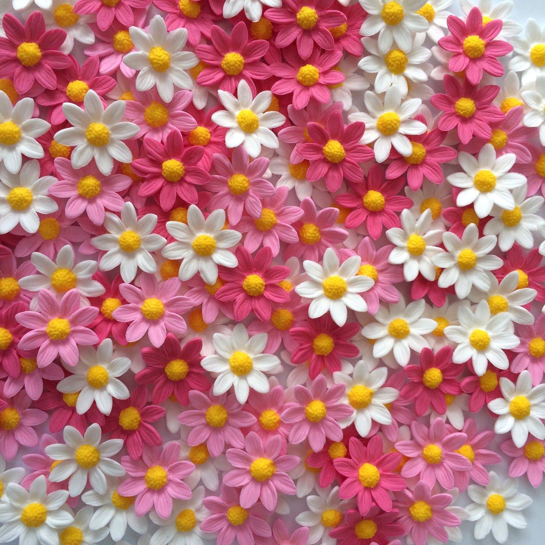 Pink White Sugar Daisies