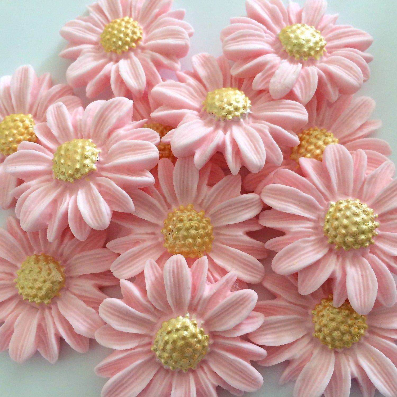 Pink Blush Daisies