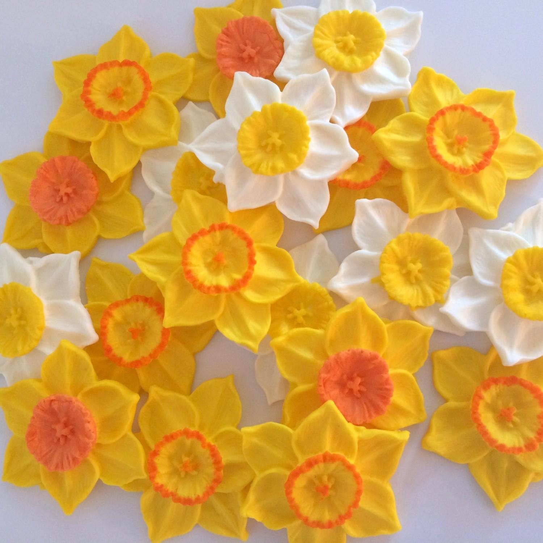 Large Daffodils