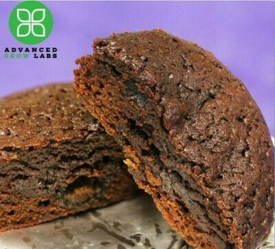 Indicore Brownie NDC: 7128 (20mg)(AGL)