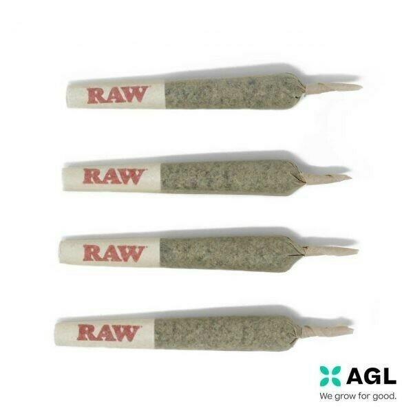 Indicol W Pre Rolls 33.01 NDC: 7663 (4 Cones x 0.45g)(AGL)