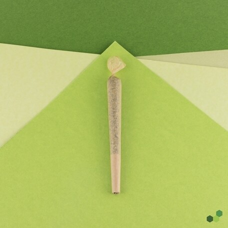 Elioraca T30 PR 8102 (3 Cones x 0.7g)(TP)