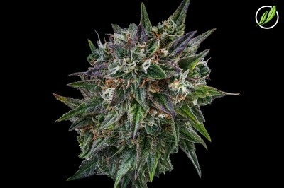 Pacifican Flower T28% I 8383 (3.5g)(CPS)