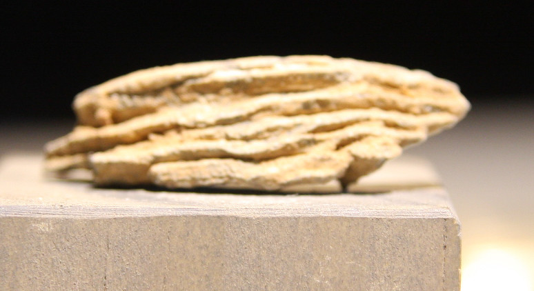 JUST ADDED ON 3/20 - ANTIETAM / BURNSIDE'S BRIDGE - Piece of a Bormann Fuse from a Spherical Artillery Shell