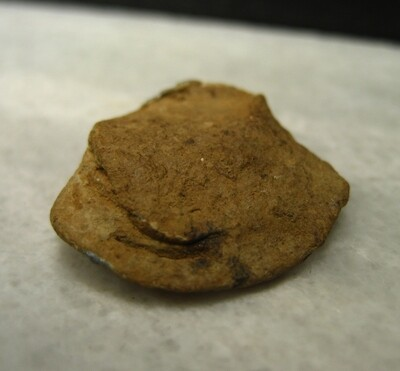 JUST ADDED ON 10/3 - THE BATTLE OF SPOTSYLVANIA / THE BLOODY ANGLE - Fired Bullet - May Have Struck Wood (Wood Fragments)