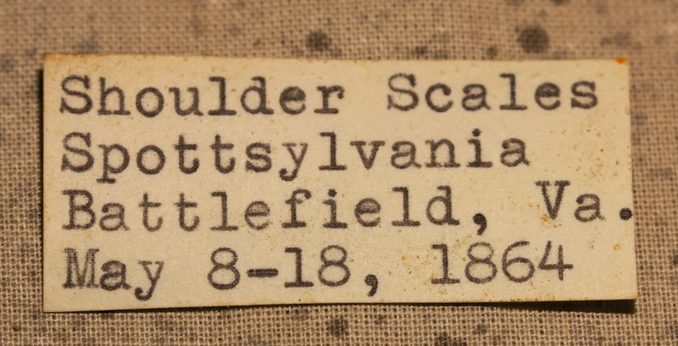 JUST ADDED ON 3/7 - THE BATTLE OF SPOTSYLVANIA - Three Pieces of Soldier's Shoulder Scales