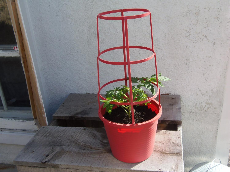 Pot et cage à tomates 2,5 gallons rouge corail