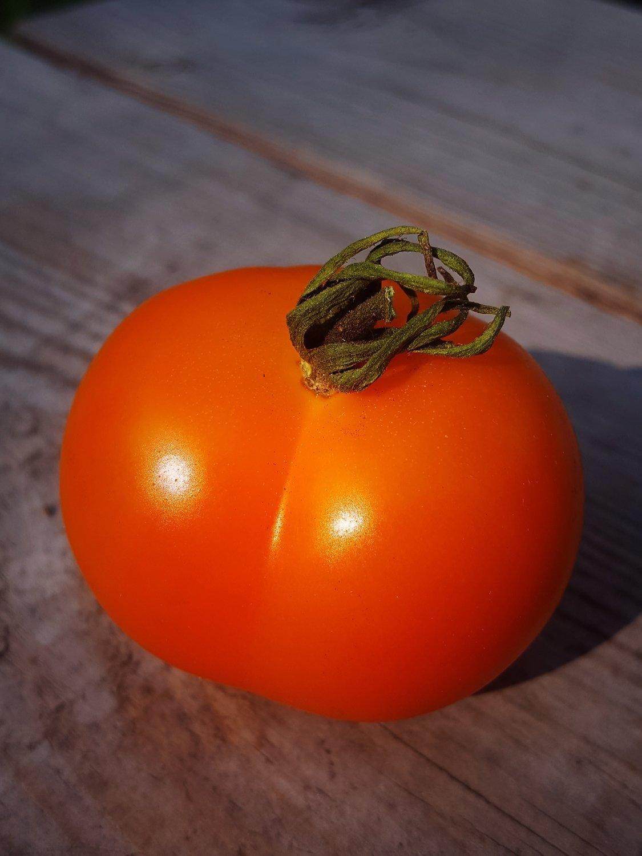 Jaune flammee  - Orange