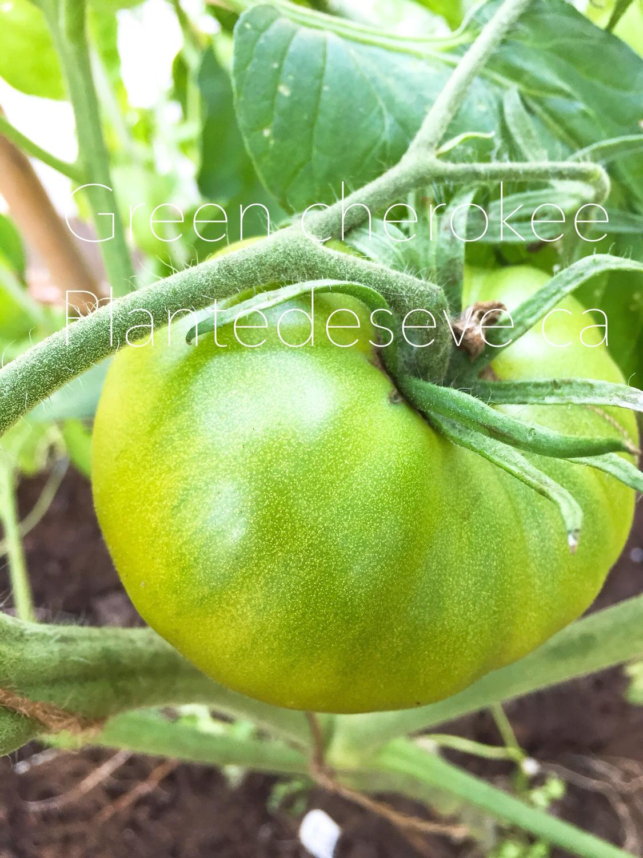 Cherokee green - Verte