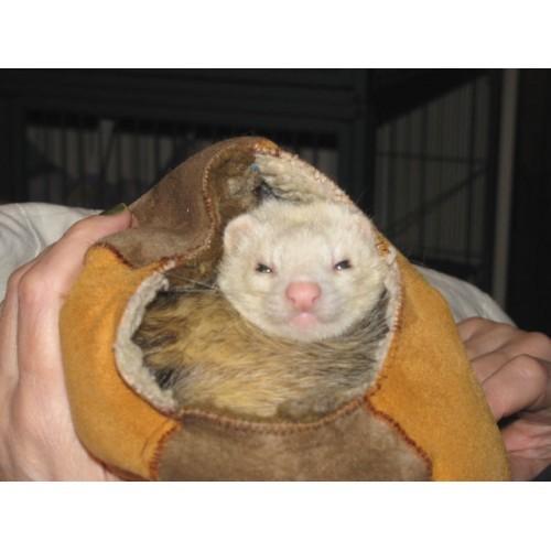 Ferret Treasures Fur Ball Happy Customer