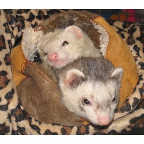 Ferret Fur Ball with 2 Ferrets