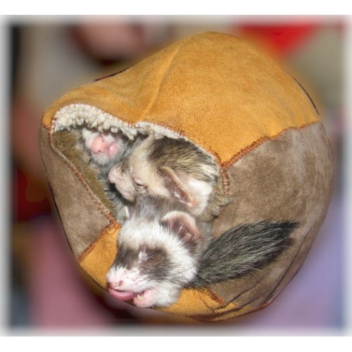 Fur Ball with 3 Maybe 4 Ferrets!