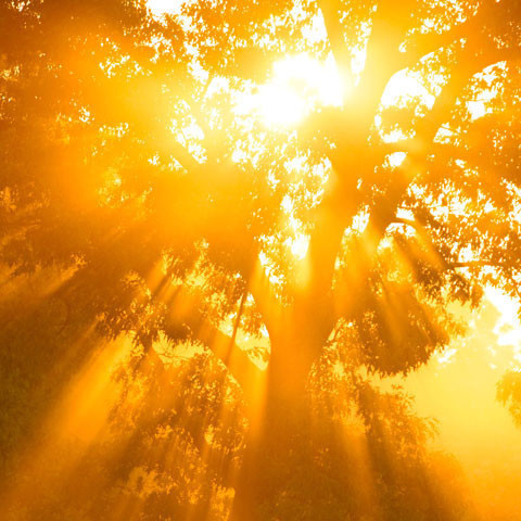 Медитативный курс 3: Постижение Высшего Мастерства