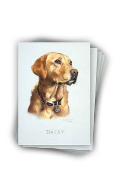 Pack of 5 Daisy note cards and envelopes