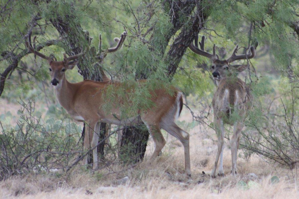 Fort Mckavett / Menard Area Annual Hunting Lease Membership - 1700 Acres with Rv Hook Ups