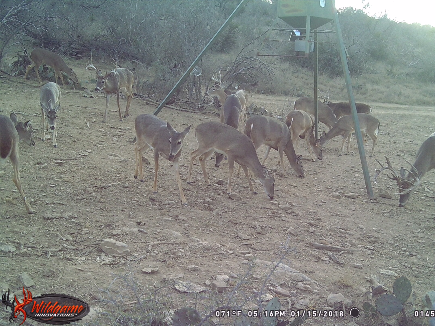 Almost 2000 +\- acre Hunting Lease West of Brady, Texas with lodging, Stands Feeders and free range axis $40k