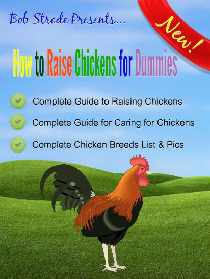 How to Raise Chickens for Dummies (ebook) ebook