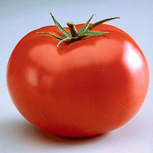 Big Beef Tomato Plant