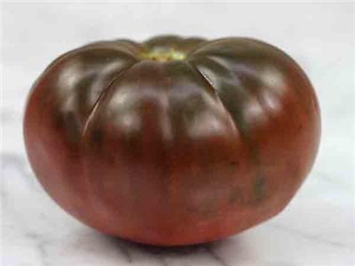Brandy Wine Tomato Plant
