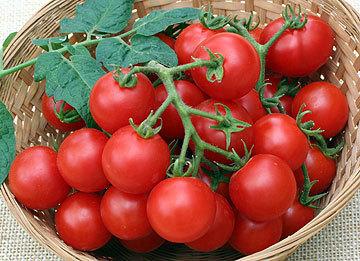 Husky Cherry Red Tomato Plant