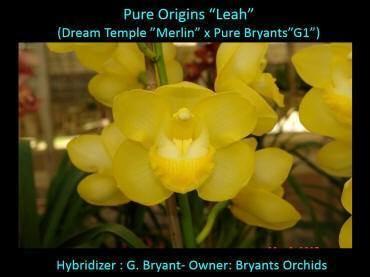 Cym Pure Origins 'Leah'