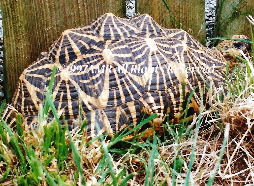 Tortoise Forage Grazing Seed Mix - Grassland