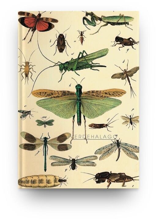 Libreta insectos voladores