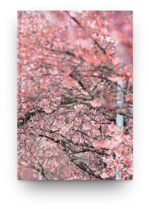 Libreta sakura