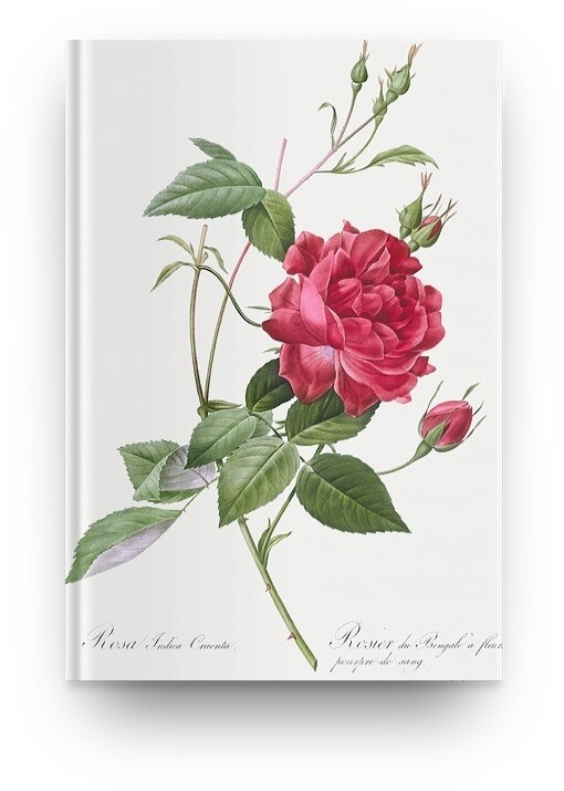 Libreta Pierre-Joseph Redouté Flor 02