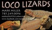 LocoLizards