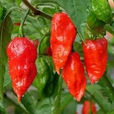 Bhut Jolokia Red 100gr