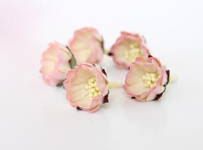 Wild Roses Pink Cream