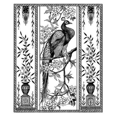 Elegant Peacock