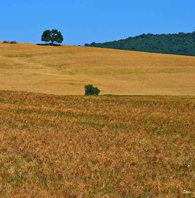 Trittico Andalusia 2