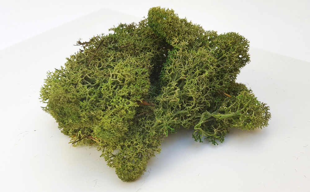 Green Spring Dark Green Bushes (Moss, 20gr)