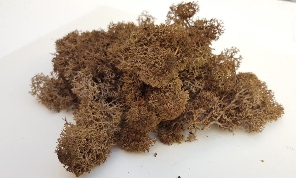 Desert Dried-up Bushes (Moss, 20gr)