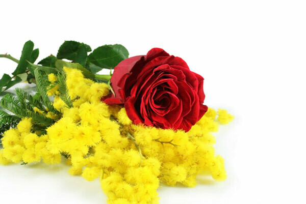 7-sette rose rosse lunghe e mimosa