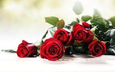 7 rose rosse, verde decorativo, gipsofila,confezione carta o rete