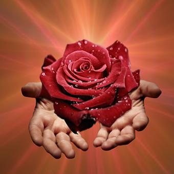 Lectura de la Rosa