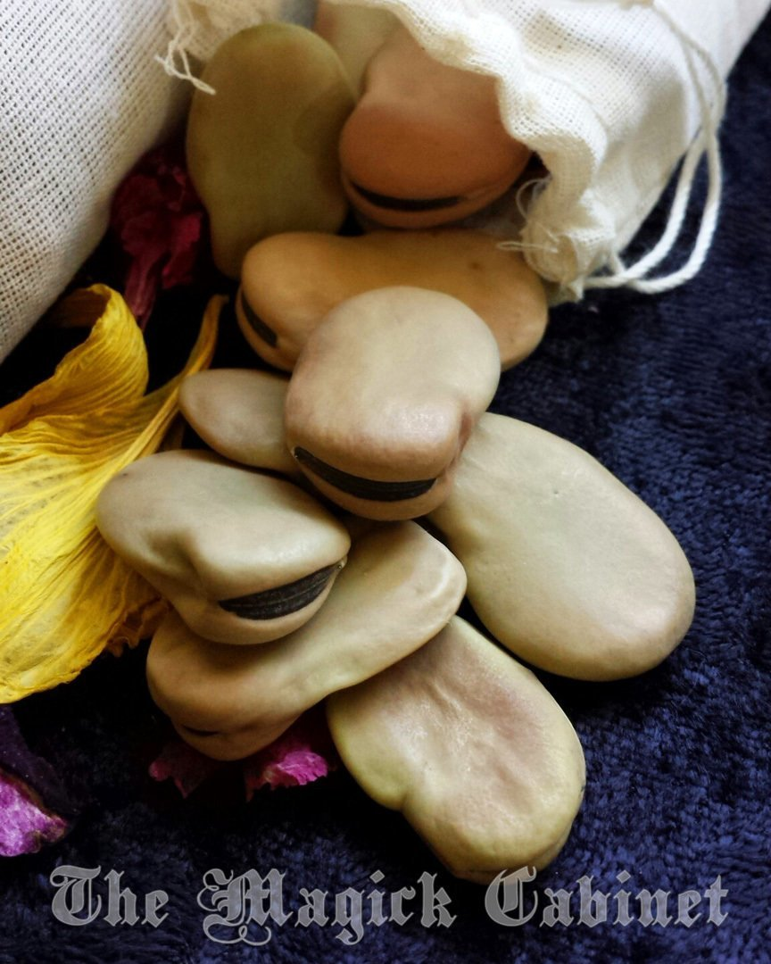 7 Mojo Beans, African Wishing Beans For Wish Magic, Good Luck Charms,  Witchcraft Supply