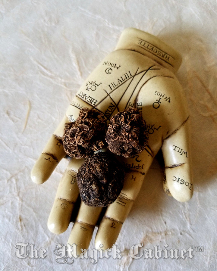 High John the Conqueror Root - size Small, Hoodoo and Magical Herbs for use  in Spells